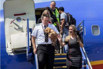 Une compagnie aérienne porte secours aux animaux à Houston
