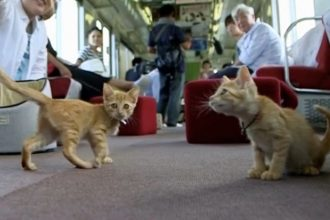 Au Japon, 30 chats voyagent dans un train pour favoriser…