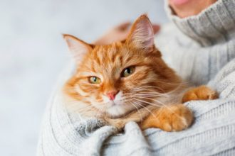 Comment manipuler un chat ?
