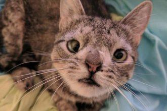 Maya, une chatte handicapée qui a échappé au pire