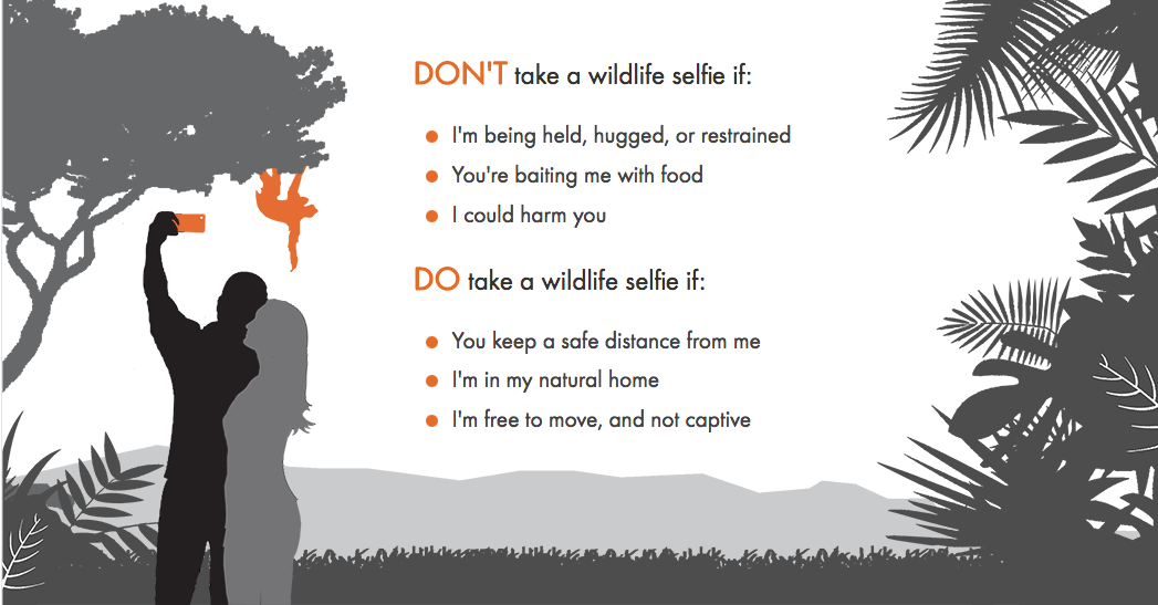 World-Animal-Protection-selfie-tips