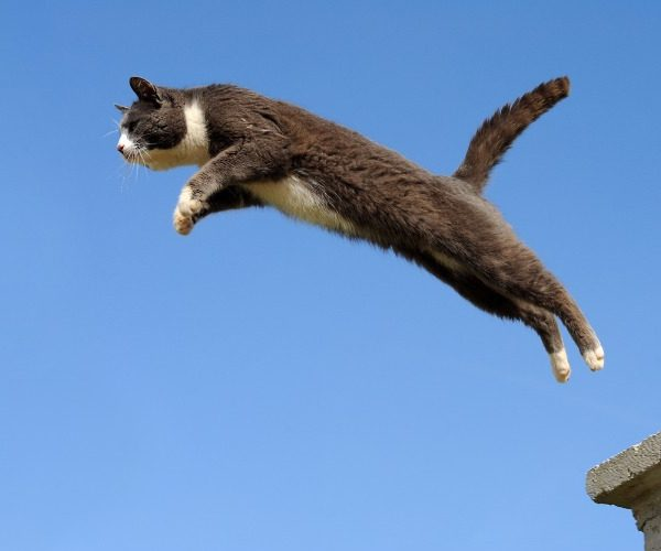 Why do cats always land on their feet?