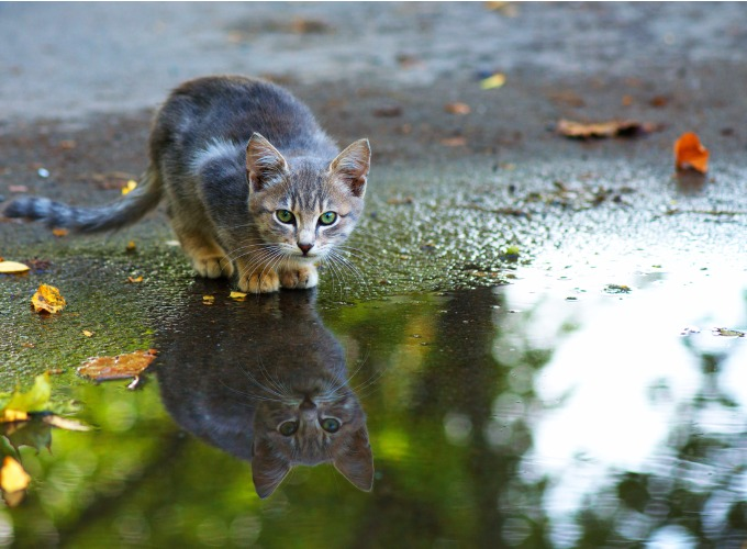 cat-rain-kitten-hunting