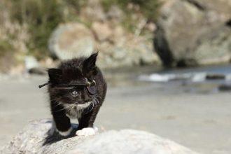 Ce chaton a perdu un oeil et porte fièrement un cache-oeil…