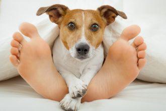 Mon chien adore me lécher les pieds,…