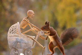 Squirrels celebrate Halloween too!