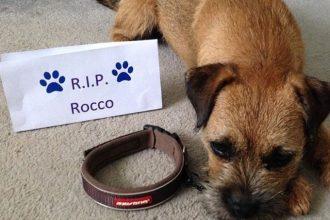 Ces chiens posent sans leur collier pour honorer la mémoire…
