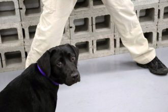 CIA bomb-sniffing dog fired for just…