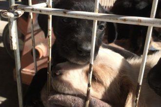 Dordogne: six chiots retrouvés dans une poubelle