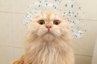 Meepo, le chat qui adore les douches !