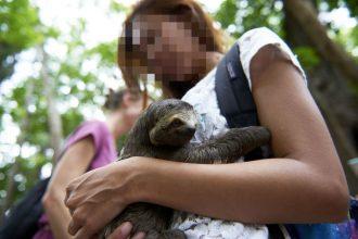 The dark truth behind sloth selfies