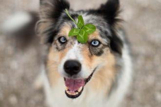 Top 10 des superstitions sur les animaux