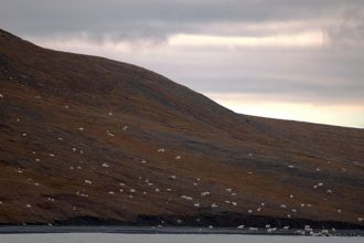 These tourists thought they had spotted a flock of sheep.…