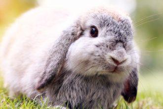 Comment bien accueillir son nouveau lapin à la maison ?