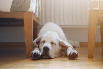 Entenderás mejor a tu perro según su postura para dormir