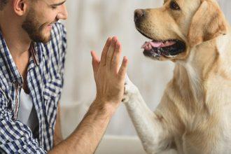 Según un estudio, queremos más a los perros que a las…