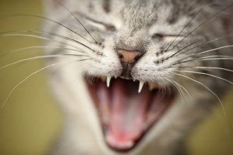 Stop your cat meowing in the morning