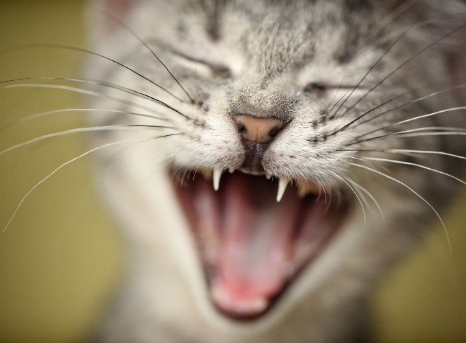 stop your cat meowing in the morning yummypets