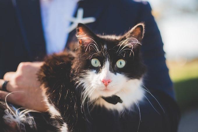 Ce chat noir et blanc a accompagné sa maitresse à son mariage.