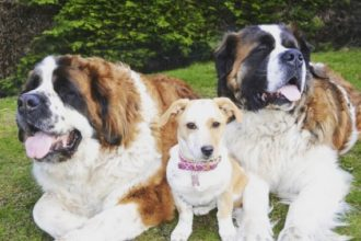 Cette chienne a une immense famille…
