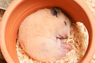 Is my hamster hibernating? Or have they died?