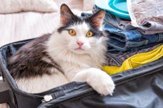Voyager avec son chat : les examens de…
