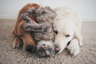 These three friends are inseparable!