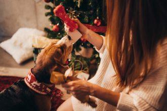 Quel cadeau de Noël pour mon animal ?