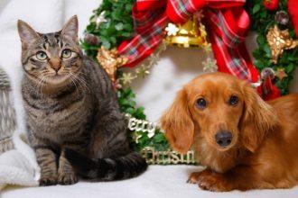 Noël avec son animal : quelles…