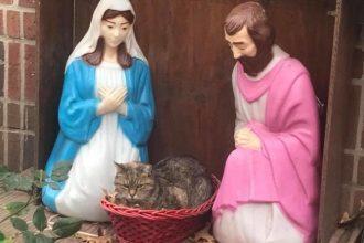 Ce chat grognon, installé dans une crèche, en a fait rire…
