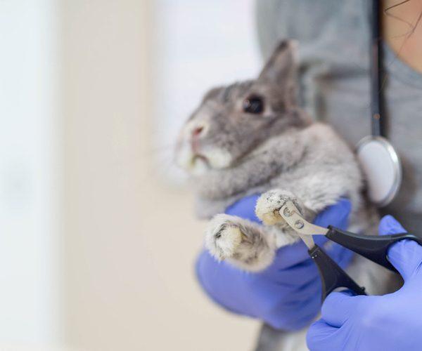 Entretien des griffes du lapin