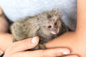 The truth: monkeys as pets