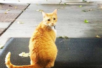 Meet Max, the cat banned from a…