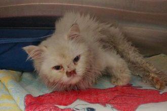 Sauvée de l'euthanasie, cette chatte…