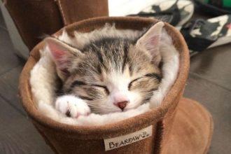 Les chats s'endorment n'importe où, la…