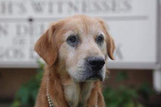 Abandonné devant une église, ce chien…
