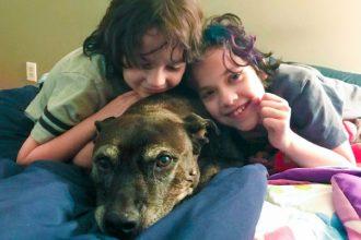 Estos niños decidieron adoptar al perro más viejo del…