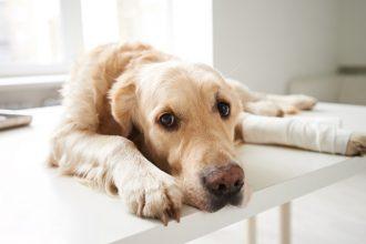 Les maladies de la peau chez le chien