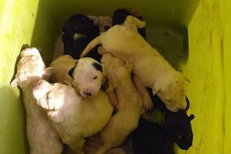 Perritos abandonados: 10 cachorros arrojados en un bote de…