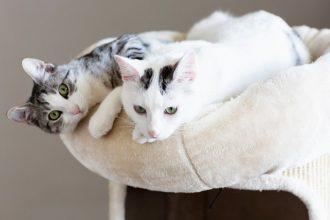 Adopter un second chat, est-ce une…