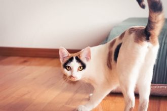 Why cats show their butts