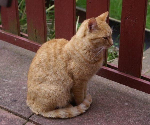 Pourquoi mon chat enveloppe ses pattes avec sa queue ?
