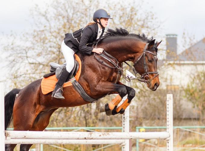 cheval compétition