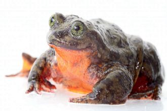 Romeo & (hopefully) Juliet: lonely frog…