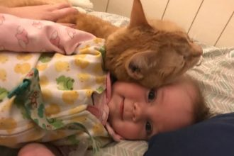 Old cat adores snuggles with her new…