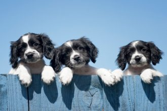 Puppy farming: UK government considers…