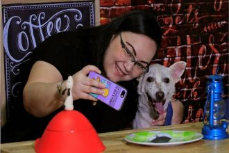 Rescue centre PAWS offering dog dinner…