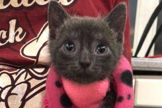 Après avoir affronté la mort, ce chaton croque la vie à…
