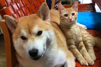 """Après la perte de son meilleur ami, ce chien """"adopte"""" un…"""