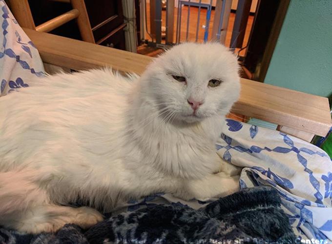 Le sanctuaire pour chat purrfect pals situé à arlington dans létat de washington a une place pour tous les chats dans le besoin